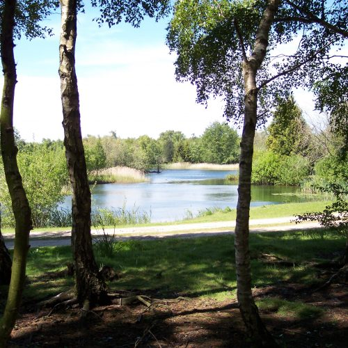 picture_of_Causeway_lake_through_trees