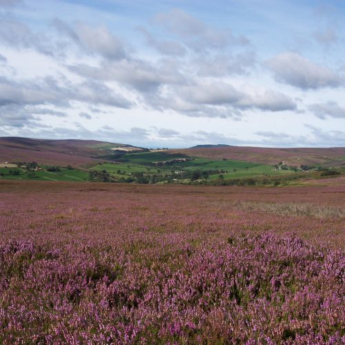 picture_of_Danby_Moors