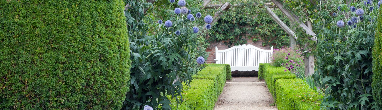 picture_of_evergreen_hedge_garden
