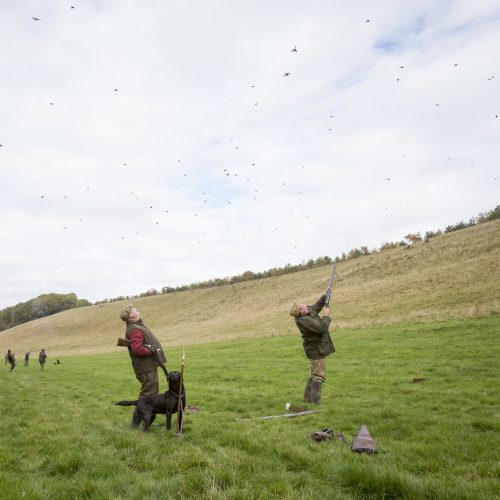 picture_of_wykeham_pheasant_and_partridge_shoot
