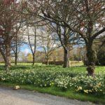 Abbey park - springtime
